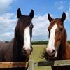 Redwings Horse Sanctuary, Caldecott