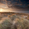 Holme Dunes (Norfolk Wildlife Trust)